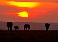 Návrat do Keni 2011 alespoň obrazem