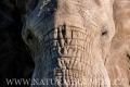 slon africký 0038