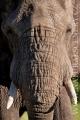 slon africký 0039