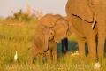 slon africký 0044