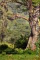 levhart africký 0013