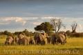 slon africký 0051
