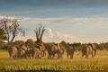 slon africký 0052