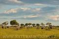 slon africký 0053