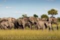 slon africký 0055
