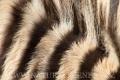 zebra stepní 0027