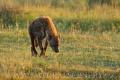 hyena skvrnitá 0008