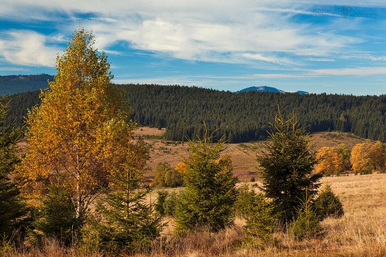 Šumava 2010-02