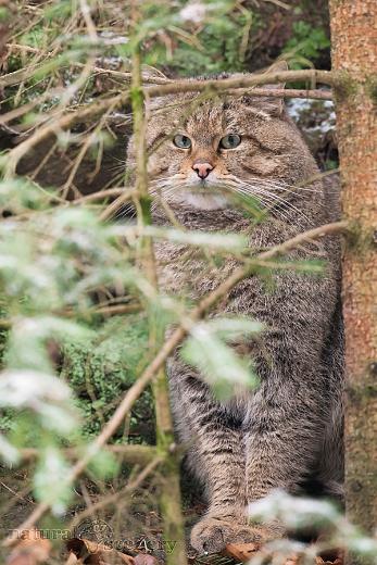 kočka 01-2009