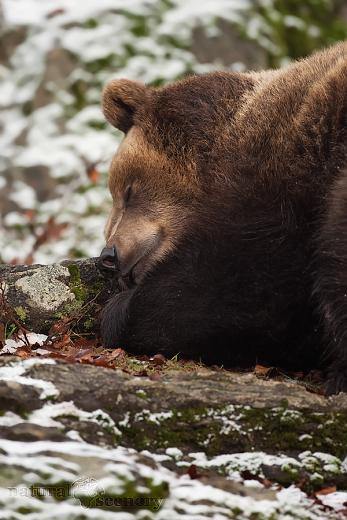 medvěd 02-2009