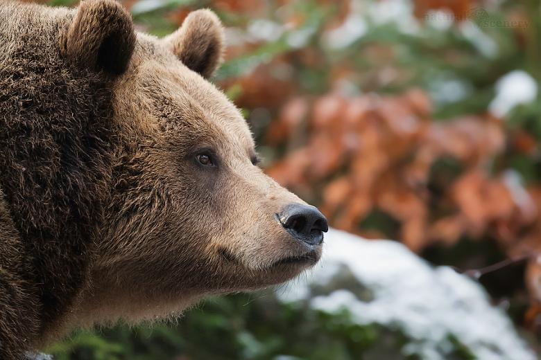medvěd 03-2009