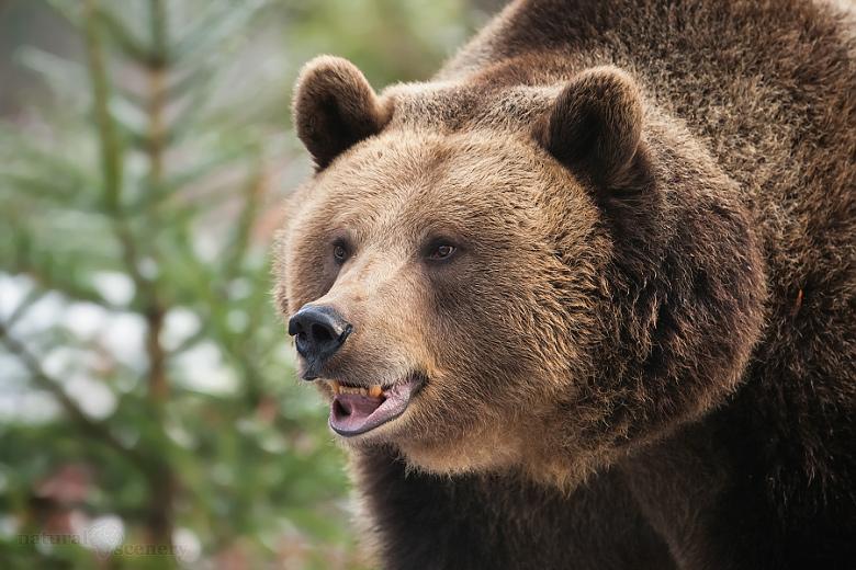 medvěd 05-2009