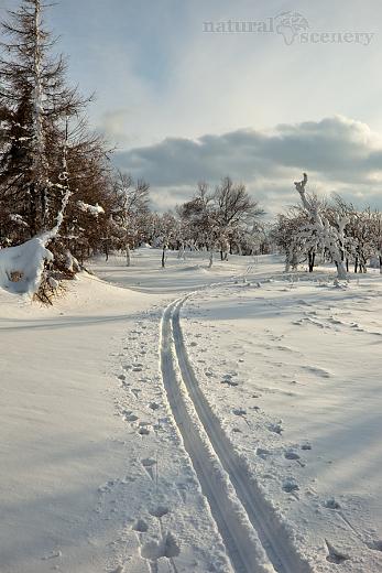 ČŠ zima_09-10_013