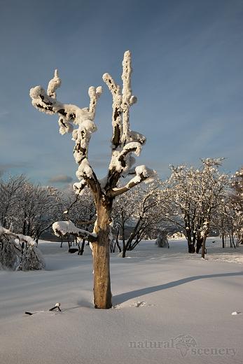 ČŠ zima_09-10_016